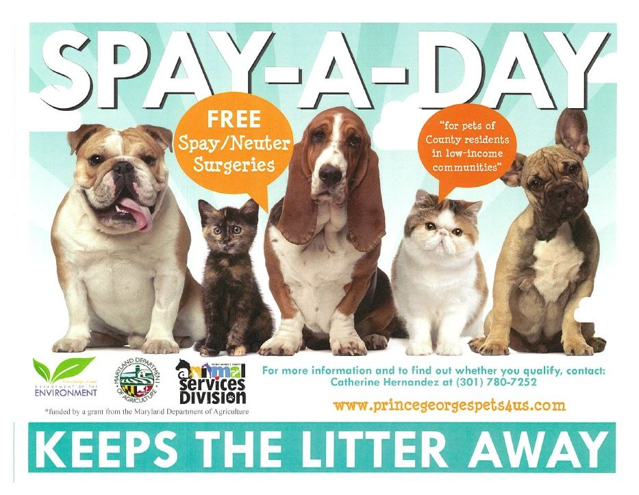 SPAY-A-DAY GRANT FLYER